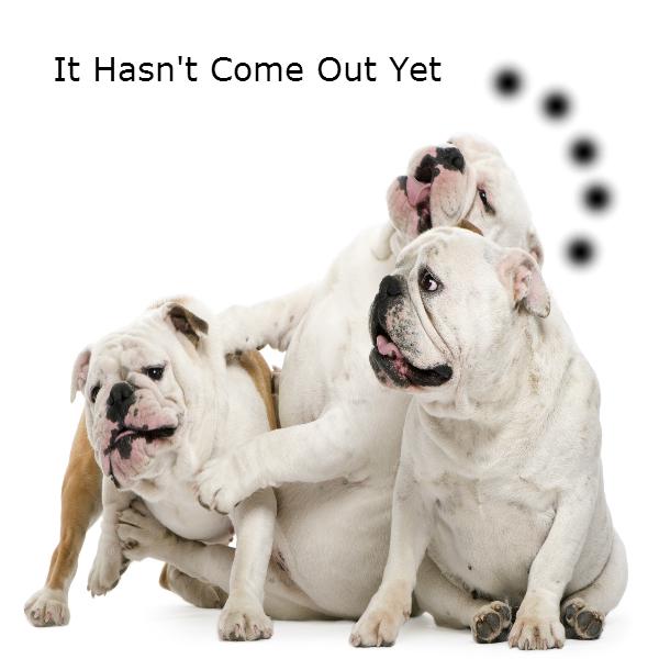 bulldog-joke-2