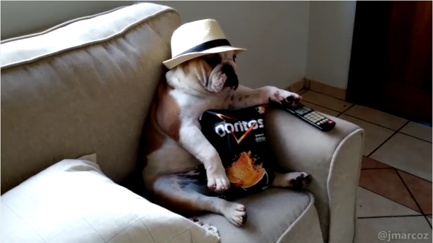 bulldog-chilling-out