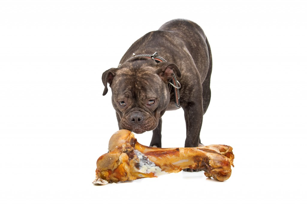 old english bulldog and a big bone