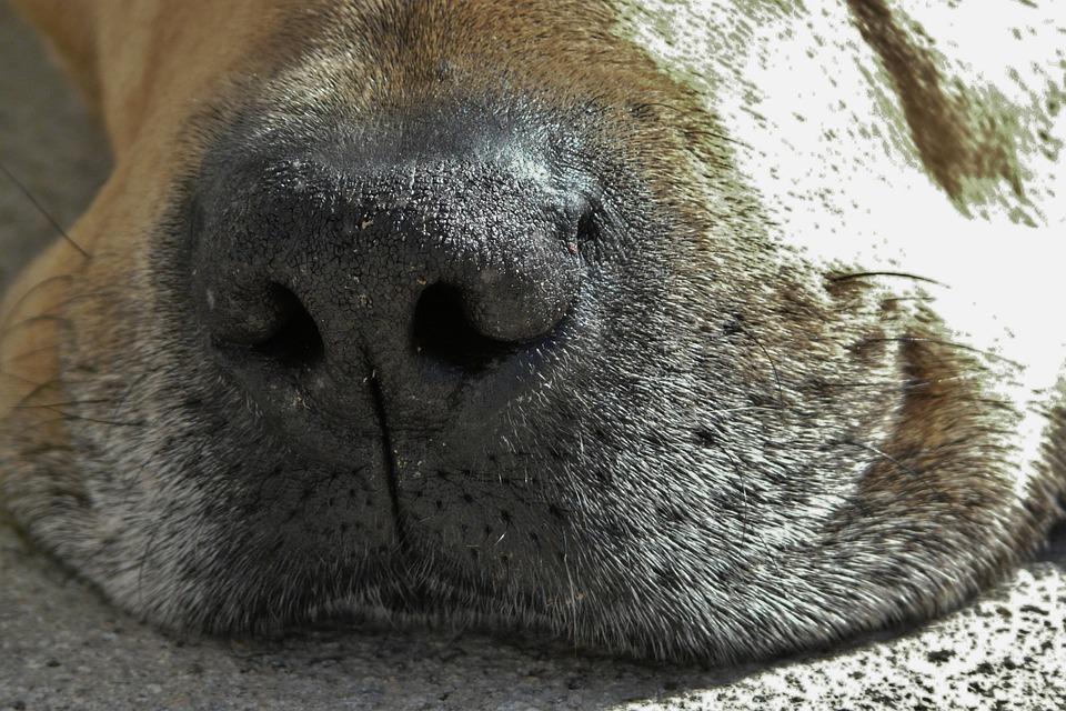 dog-1196847_960_720