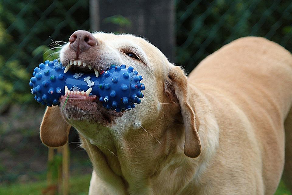dog-167663_960_720