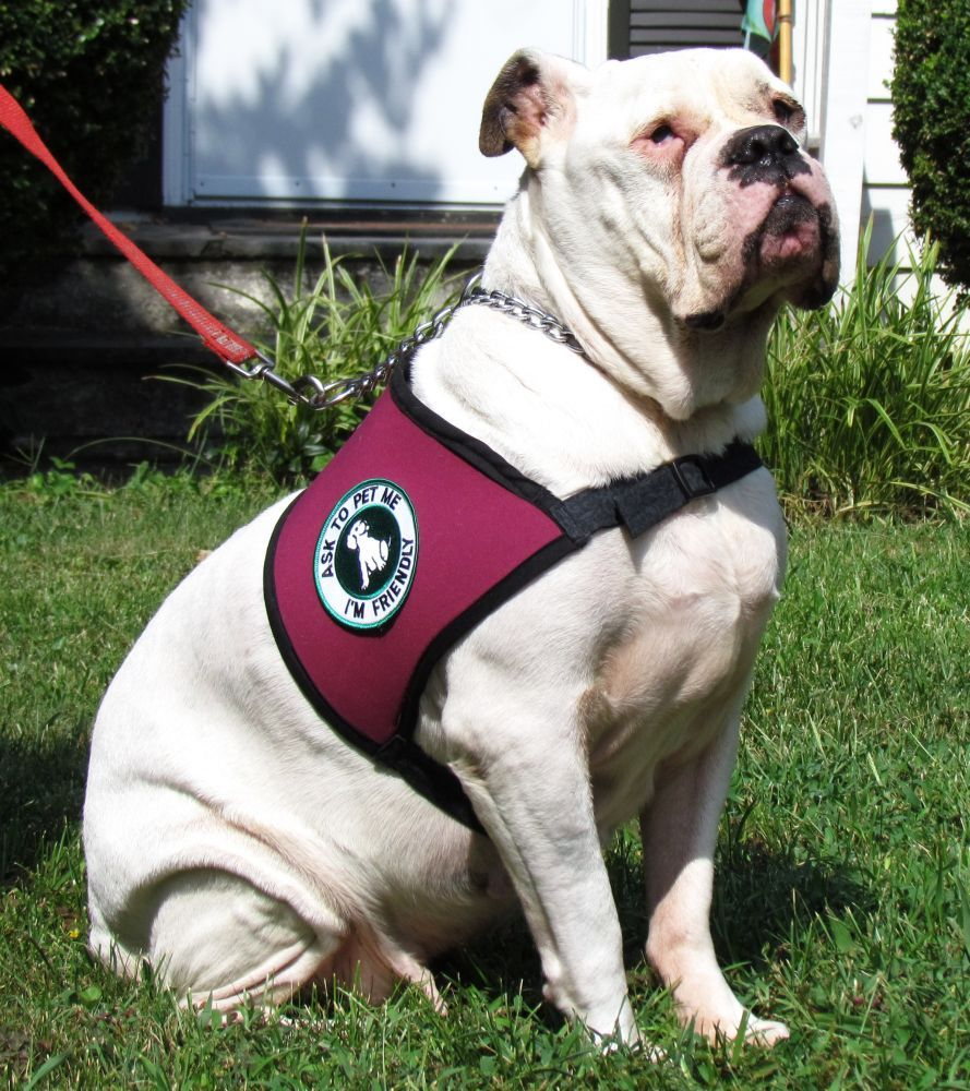 What Is An Emotional Service Dog